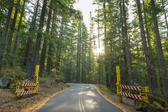 Through the gates (OregonDOT) Tags: mckenziepass mckenziehighway mckenzie or242 scenicoregon scenic oregondot oregon