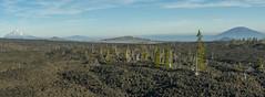 Landscape (OregonDOT) Tags: mckenziepass mckenziehighway mckenzie or242 scenicoregon scenic oregondot oregon