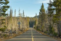 Frost on the highway (OregonDOT) Tags: mckenziepass mckenziehighway mckenzie or242 scenicoregon scenic oregondot oregon