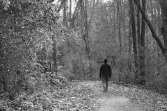 Autumn Walker In The Woods (Modkuse) Tags: acros acrossimulation xh1acrossimulation xh1acros nature natural natureart art artphotography photoart artistic artisticphotography monochrome bw blackandwhite trail fujifilmxh1 fujifilm fujinon xh1 fujinonxf1655mmf28rlmwr xf1655mmf28rlmwr nopostprocessing
