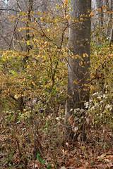 Intimate Landscape - Forest In Autumn (Modkuse) Tags: autumn art nature natural autumnleaves natureart autumnlandscape trees artistic fineart fujifilm provia photoart nopostprocessing fineartphotography artisticphotography artphotography sooc straightoutofcamera fujifilmproviasimulation xh1proviasimulation xh1provia fujinon xh1 xf1655mmf28rlmwr fujinonxf1655mmf28rlmwr fujinonxh1
