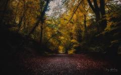 Autumn Light (RTA Photography) Tags: autumn nikon tamron light natur naturephotography woodland landscape devon rain leaves leaf shadows gold flickr colours trees woods parke boveytracey rtaphography 1001nightsthenew 1001nightsthenewmagiccity