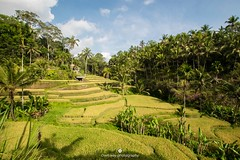 Rice fields of Bali (www.ownwayphotography.com) Tags: sky blue view vier nature palm green fields rice bali indonesia