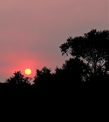Meditation on life lost in our wildfires (WinRuWorld) Tags: sunset meditation silhouette sky trees pink dusk nightfall evening sundown outside canon canonphotography meteorology astronomy sun scenery pinksky