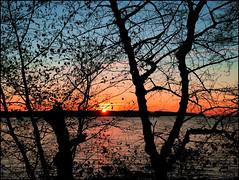 "The Cool of a November sunset (FernShade) Tags: vancouver britishcolumbia canada westcoast pacificnorthwest stanleypark""fallfallcolorsautumncolorstreesscenerynatureurbannature""treesilhouettes""colors scenic ""fallscenery"" sunset water ocean sea ""secondbeach"""