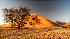 Postcard Greetings From Sossusvlei (RudyMareelPhotography) Tags: africa deadvlei jimmynelson karasregion namibnaukluftnationalpark namibia natgeotravel rudymareelphotography sossusvlei ngc travel travelphotography wanderlust flickrclickx flickr hardapregion
