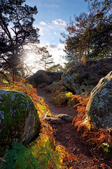IMGP8501_DxO (hbensliman.free.fr) Tags: travel forest france nature landscape autumn foliage trees season pentax pentaxart pentaxk1 path fontainebleau outside outdoor