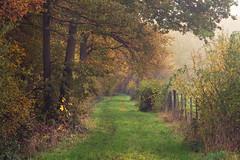 Rusty Autumn (Netsrak) Tags: baum bäume eu eifel europa europe forst landschaft natur nebel fog landscape mist nature