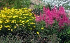 Цветочный калейдоскоп (lvv1937) Tags: thisiswhyiboughtacamera photographersaged50 flickrclickx coloursofflickr amateurs afeastformyeyespublicgroup цветы клумба сад