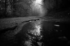 The path (Black&Light Streetphotographie) Tags: mono monochrome lichtundschatten lightandshadows landscape landschaft tiefenschärfe dof depthoffield sony sonya7rii fullframe vollformat bw blackandwhite blackwhite bokeh bokehlicious blur blurring nebel nebelig misty mist fog