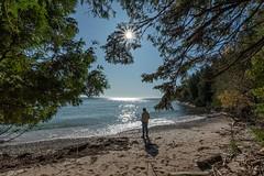 The lake looks back (NetAgra) Tags: doorcounty wisconsin lakemichigan water greatlakes washingtonisland sunburst trees beach sand rocks waves