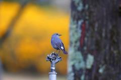 回眸 (mikleyu) Tags: 鳥 動物 秋天