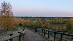 View on Kwintelooijen , allmost sunset. November 8th. (Cajaflez) Tags: nederland kwintelooijn trap stairs voormaligezandafgraving naturearea herfst herbst autum autumn berken beeches trees bomen moon maan fences hekwerk coth5