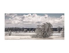 Iced (janet.capling) Tags: trees winter sky cold ice water clouds landscape frosen blue white texture pattern