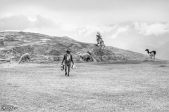 Cusco to Ollataytambo (7)-2 (Polis Poliviou) Tags: peru cuzco cusco valley pisac urubamba quechua latinamerica southamerica inca machupicchu peruvian andesmountains peruvians spanishempire polis urbanphotography travelphotos incaempire ollantaytamboruins poliviou polispoliviou ©polispoliviou2019 pisacsuvenirs travel holiday ancient catholic museums vacations historiccity pisacmarket incacity heritage history ruins citadel unesco classical christianity machupicchupueblo traveldestination cuscoperu city architecture cathedral colonial andes sacredvalley masterpiece antithesis columbian franciscopizarro color colour temple colorful hill historical colourful urubambariver rivervalley spanishconquistadors incancitadel