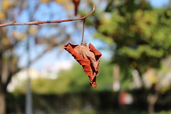 The beauty of the change (Argyro Poursanidou) Tags: leaf withered autumn flora greece colorful nature φύλλο φθινόπωρο φύση