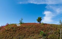 Himmel und Heide auf der Motta Salacina, zwischen Bergell und Oberengadin (Graubünden) (14/09/2019 -04) (Cary Greisch) Tags: bergell che carygreisch kantongraubünden maloja mottasalacina switzerland valbregaglia