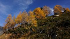 Forêt d'automne vers Chamonix (Sam Photos with Sony native jpeg) Tags: chamonix argentière automne autumn forêt forest orange ciel bleu
