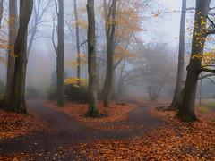 Y...in the fog. (Zoom58.9) Tags: fog forest park trees leaves way nature landscape outside europe germany bremerhaven nebel wald bäume blätter wege natur landschaft draussen europa deutschland sony sonydscrx10m4