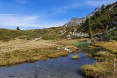 Auf der Motta Salacina (Maloja, Bergell, Graubünden) (14/09/2019 -09) (Cary Greisch) Tags: che bergell switzerland see lac maloja valbregaglia kantongraubünden carygreisch mottasalacina