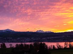 Sonnenuntergang (oonaolivia) Tags: sonnenuntergang sunset zürichsee schweiz switzerland landschaft landscape nature see lake water pilatus rigi