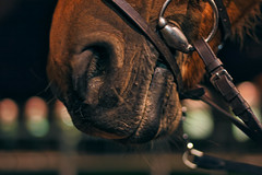 Night riding session (jeromedelaunay) Tags: equine equitation equestrian equestrianlife equestrians marnelacoquette haras jardy stable france europe horse horses horseriding horselover horselife cheval chevaux caballos caballo cavalo cavalos rider light night photography animal animals