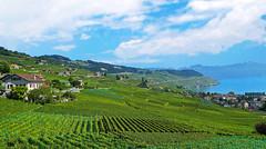 SWITZERLAND - Lavaux vineyards and Leman lake (Jacques Rollet (Little Available)) Tags: vineyard vignoble vigne paysage landscape lac lake leman montagne ciel sky nuage cloud fabuleuse