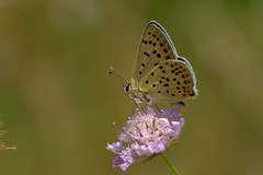 L'été dernier..... (jpto_55) Tags: papillon proxi bokeh xt20 fuji fujifilm hautegaronne france fujixf55200mmf3548rlmois