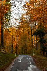 Golden Autumn Road - November 2019 V (boettcher.photography) Tags: rheinneckarkreis badenwürttemberg germany deutschland sashahasha boettcherphotos boettcherphotography herbst autumn fall november 2019 baum tree bäume trees strase road mückenloch neckargemünd finsterbachtal