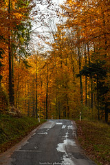Golden Autumn Road - November 2019 IV (boettcher.photography) Tags: rheinneckarkreis badenwürttemberg germany deutschland sashahasha boettcherphotos boettcherphotography herbst autumn fall november 2019 baum tree bäume trees strase road mückenloch neckargemünd finsterbachtal