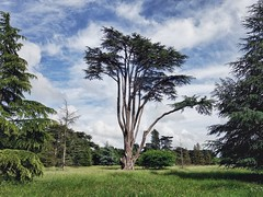 In the gardens of Ickworth House (sixthland) Tags: ickworth garden tree rural landscape