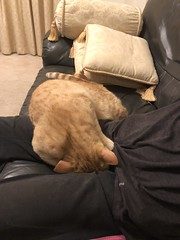 IMG_0733 Kneading and digging (drayy) Tags: fico orange tabby cat knead kneading dig digging hide hiding thebiggestgroupwithonlycats ggg oreengeness