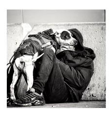 Un chien se fiche éperdument des belles maisons ou des vêtements de marque. Les chiens se moquent que vous soyez riches ou pauvres, donnez lui de l'amour et il vous en donnera. (streetspirit13) Tags: streetphotographer streetpassionaward marseillestreet streetphoto dog chien danslarue bw bnwphotography blackandwhite noiretblanc