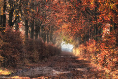 20112019-DSC_0005 (vidjanma) Tags: rachamps automne bocage chemin matin