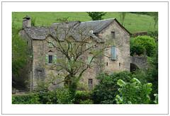 Mise au vert  -  Going green (diaph76) Tags: france extérieur paysage landscape maisons houses arbres trees feuillage foliage habitation verdure greenery