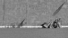 a young tree and his shadow (heinzkren) Tags: schwarzweis blackandwhite biancoetnero noiretblanc monochrome tree shadow canon eosr people human wall street streetphotography candid mauer working men gardener gärtner grass rasen planting bepflanzung