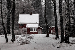 Cabin in the forest (langdon10) Tags: countryside norway rotnes cabin forest snow snowing tree trees winter