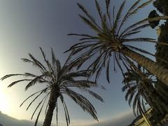 Lerici (vannuc) Tags: sea sky italy liguria palma palme lerici gopro friends weekend
