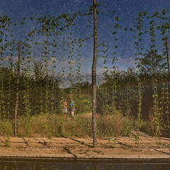 Jardin disparu, Chaumont-sur-Loire, 2016 (andrefromont) Tags: andréfromont andrefromontfernandomort fernandomort festivaldesjardins2016 loire chaumontsurloire jardin garden