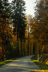 Autumn Road in November 2019 (boettcher.photography) Tags: rheinneckarkreis badenwürttemberg germany deutschland sashahasha boettcherphotos boettcherphotography herbst autumn fall november 2019 baum tree bäume trees strase road mückenloch neckargemünd finsterbachtal