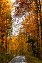 Golden Autumn Road - November 2019 VII (boettcher.photography) Tags: rheinneckarkreis badenwürttemberg germany deutschland sashahasha boettcherphotos boettcherphotography herbst autumn fall november 2019 baum tree bäume trees strase road mückenloch neckargemünd finsterbachtal