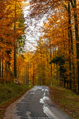 Golden Autumn Road - November 2019 III (boettcher.photography) Tags: rheinneckarkreis badenwürttemberg germany deutschland sashahasha boettcherphotos boettcherphotography herbst autumn fall november 2019 baum tree bäume trees strase road mückenloch neckargemünd finsterbachtal