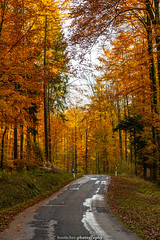 Golden Autumn Road - November 2019 II (boettcher.photography) Tags: rheinneckarkreis badenwürttemberg germany deutschland sashahasha boettcherphotos boettcherphotography herbst autumn fall november 2019 baum tree bäume trees strase road mückenloch neckargemünd finsterbachtal
