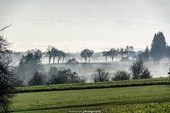 Misty Landscape near Gaiberg - November 2019 III (boettcher.photography) Tags: rheinneckarkreis badenwürttemberg germany deutschland sashahasha boettcherphotos boettcherphotography herbst autumn fall november 2019 baum tree bäume trees landscape landschaft natur nature gaiberg misty foggy nebelig nebel fog mist
