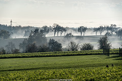 Misty Landscape near Gaiberg - November 2019 II (boettcher.photography) Tags: rheinneckarkreis badenwürttemberg germany deutschland sashahasha boettcherphotos boettcherphotography herbst autumn fall november 2019 baum tree bäume trees landscape landschaft natur nature gaiberg misty foggy nebelig nebel fog mist