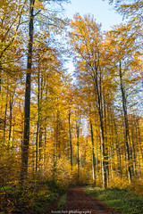 In the Forest near Gaiberg - November 2019 I (boettcher.photography) Tags: rheinneckarkreis badenwürttemberg germany deutschland sashahasha boettcherphotos boettcherphotography herbst autumn fall november 2019 tree baum bäume trees landscape landschaft gaiberg