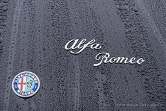 "Alfa-Romeo Duetto ""Osso di Seppia"" - 1966 (Perico001) Tags: duetto spider 1966 ossodiseppia belgianroyalfamily princesspaola alfaromeo milano torino anonimalombardafabbricaautomobili italië italy italia cabriolet convertible decapotable dhc cabrio dropheadcoupé roadster barchetta spyder barquetta auto automobil automobile automobiles car voiture vehicle véhicule wagen pkw automotive ausstellung exhibition exposition expo verkehrausstellung messe autoshow autosalon motorshow carshow nikon df d700 2019 knokke zoute belgië belgique belgium belgien belgica theroyalzoutegolfclub concoursdelegance zouteconcoursdelegance oldtimer classic klassiker"