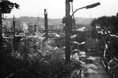Setagaya (kiku-chiyo) Tags: olympus om1 zuiko 135mm fujifilm neopan 100 across 35mm film analog setagaya tokyo japan