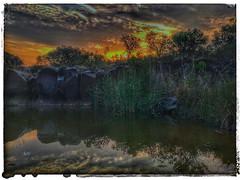 african sunset (paul.ralphs) Tags: africa sunset waterscape bush bushveld safari gamereserve nature naturereserve cluds treees