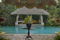 Bali_1019_112 (mizzbritta) Tags: bali indonesia travel 2019 filmphotography 35mm nikon nikonf3 kodakportra400